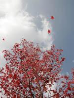 紅葉飛びます!